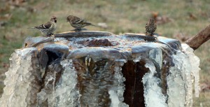 rock-column-bird-bath-fountain-winter
