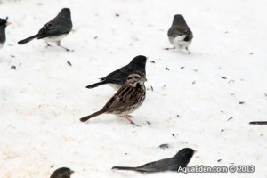 Birds at feeder in MN
