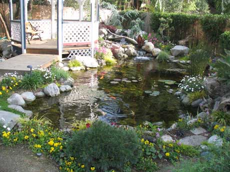 Eric Triplett's (owner of Exotic Aquatics) personal home pond
