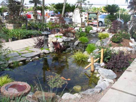 Display pond at a local Nursery