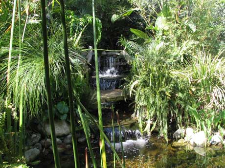 A tropical waterscape created by The Pond Diggers