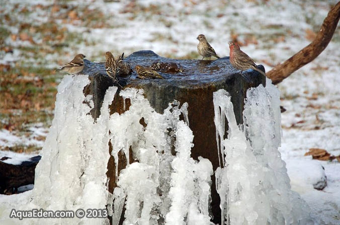 3-finches-bird-bath-fountain-mn
