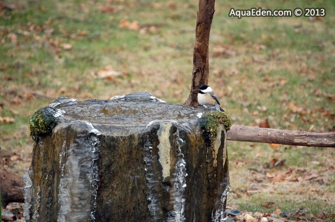 black-capped-chickadee-bird-fountain-mn