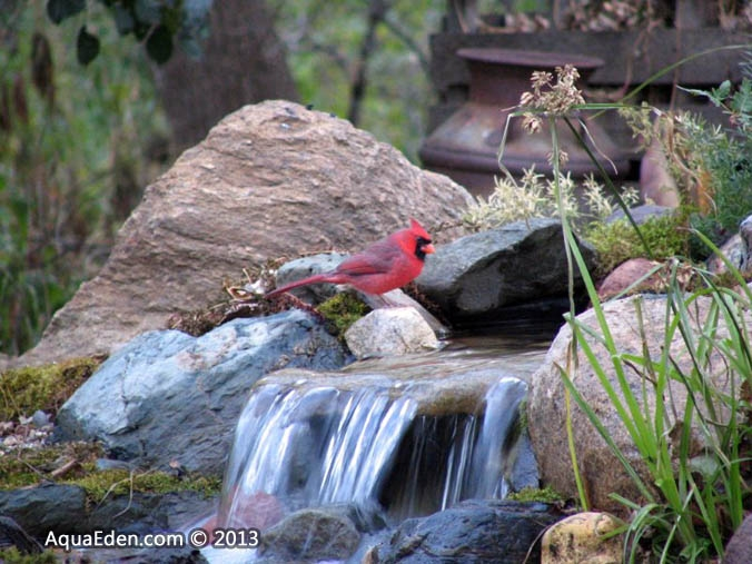 cardinal-twin-waterfalls-minnesota