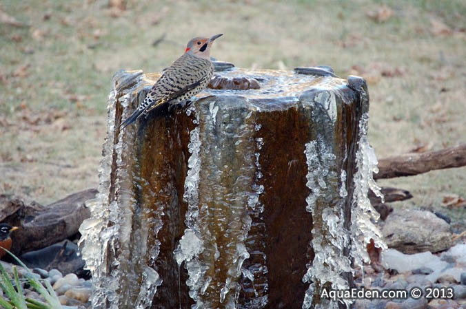 northern-flicker-bird-bath-fountain-mn