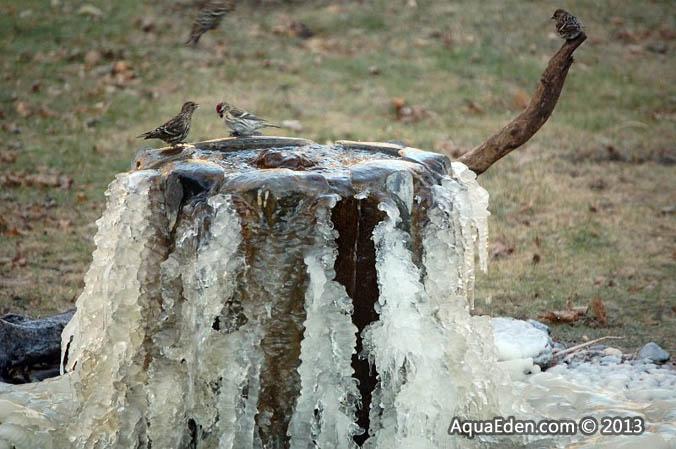 redpoll-pine-siskin-fountain-mn