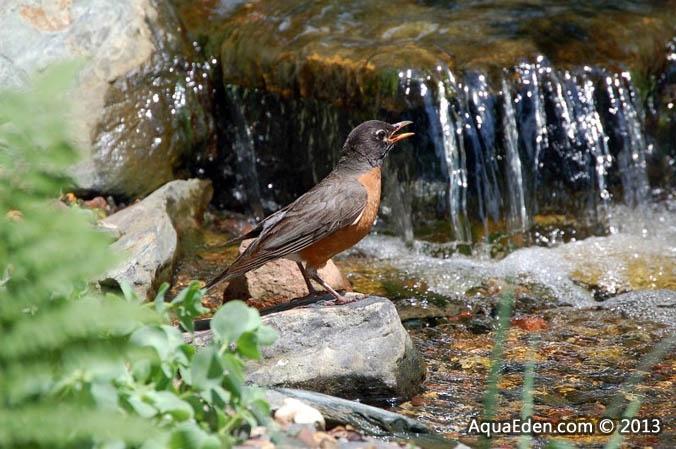 robin-waterfall-faribault-minnesota