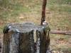 black-capped-chickadee-bird-fountain-mn