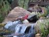 cardinal-twin-waterfalls-minnesota