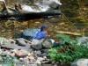 eastern-bluebird-stream-mn