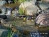 nashville-warbler-water-feature-mn