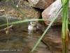 wood-duck-pond-minnesota
