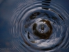 water-drip