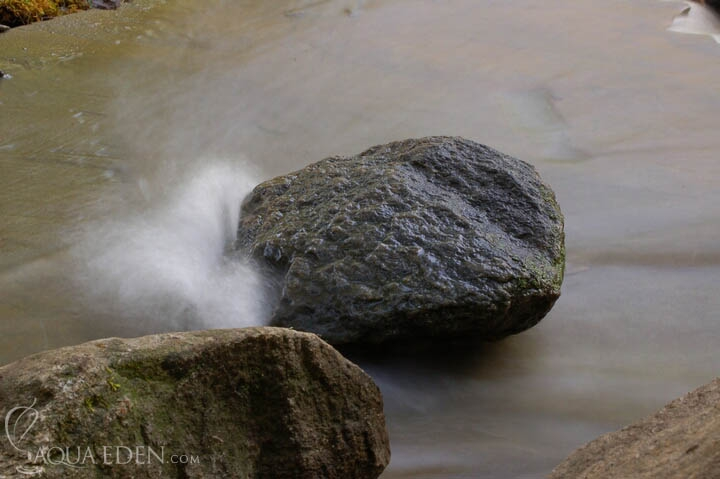 backyard-stream-lakeville-mn