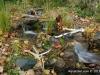 fall-waterfall-landscape-mn